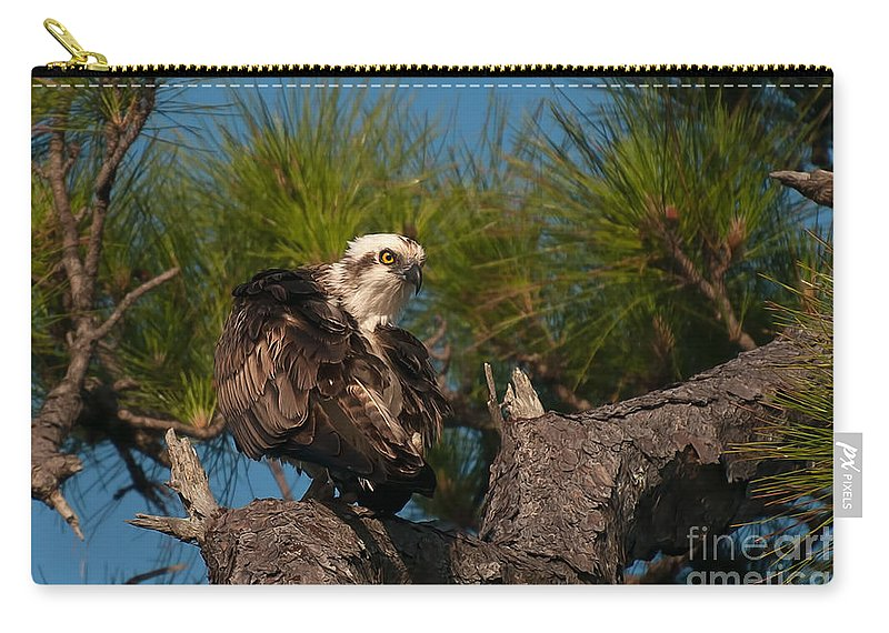 Osprey Carry-all Pouch featuring the photograph Osprey Preen 1 by Photos By Cassandra