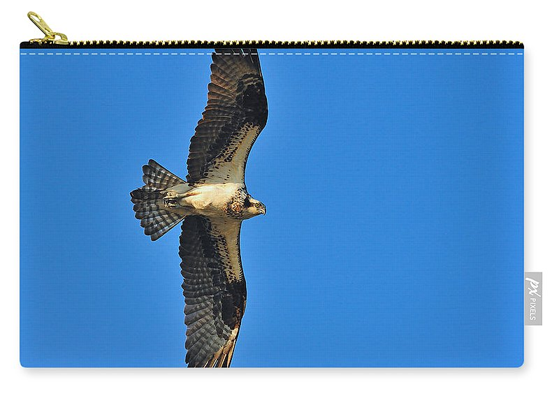 Osprey Carry-all Pouch featuring the photograph Osprey by Tony Beck