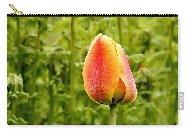 Tulip Carry-all Pouch featuring the photograph Outstanding by HHelene