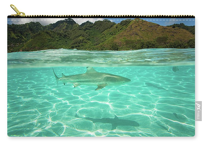 Photography Carry-all Pouch featuring the photograph Over Under, Half Water Half Land, Shark by Panoramic Images