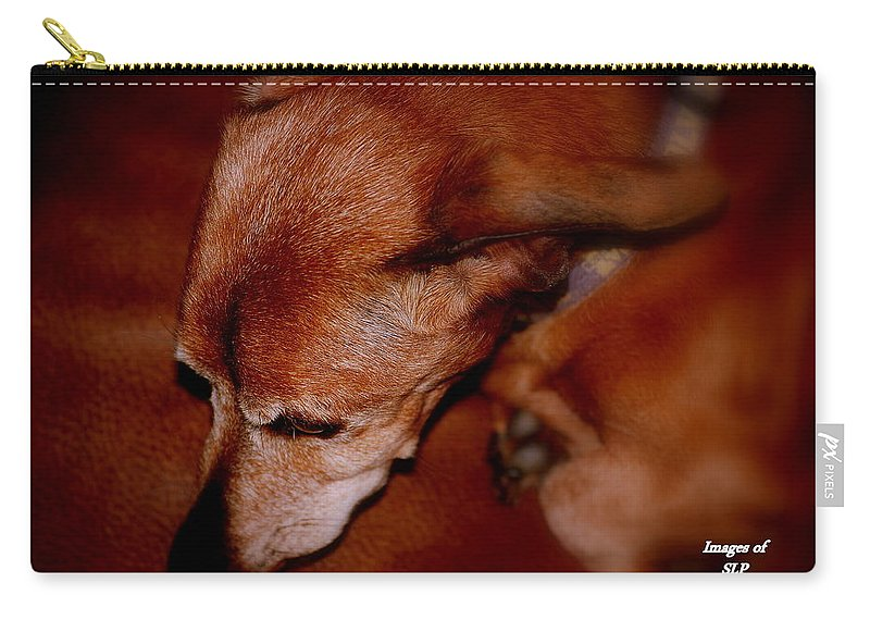 Dog Carry-all Pouch featuring the photograph Ozzie by Scott Polley