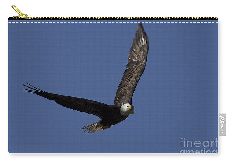Ozzy Carry-all Pouch featuring the photograph Ozzy In Flight by Meg Rousher