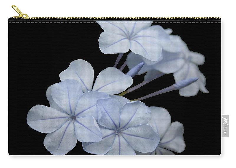 Plumbago Carry-all Pouch featuring the photograph Pale Blue Plumbago Isolated On Black Background by Taiche Acrylic Art