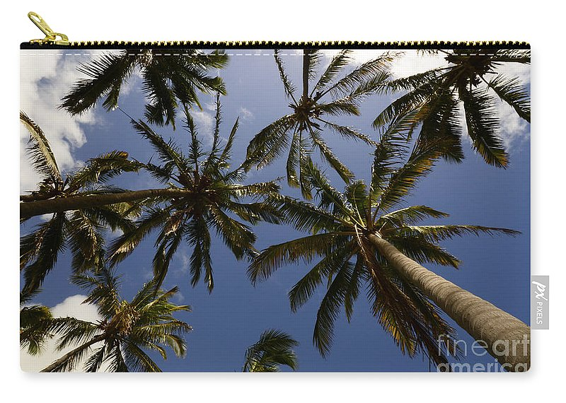 Palm Carry-all Pouch featuring the photograph Palm Trees 3 by Bob Christopher