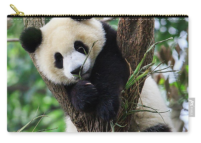Panda Carry-all Pouch featuring the photograph Panda Cub Resting On Tree by Feng Wei Photography
