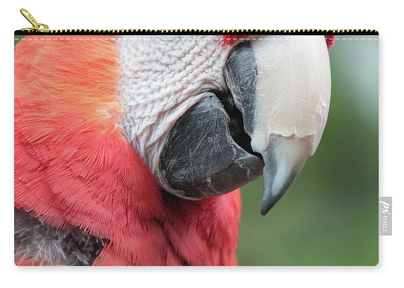 Parrot Carry-all Pouch featuring the photograph Parrot Profile by Carol Groenen