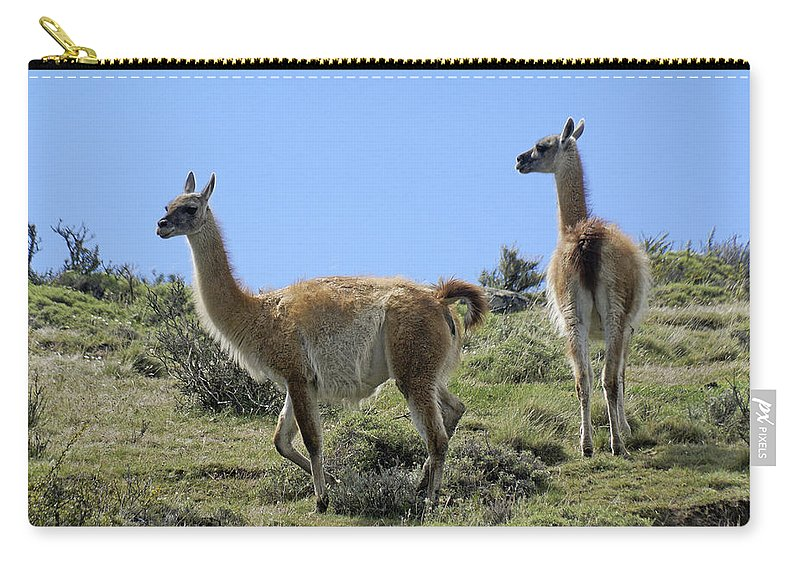 Chile Carry-all Pouch featuring the photograph Patagonian Guanacos by Michele Burgess