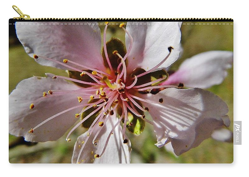 Peach Blossom Carry-all Pouch featuring the photograph Peach Blossom by D Hackett