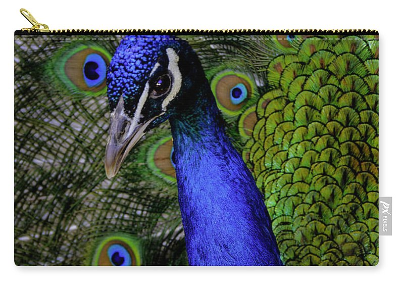 Peacock Carry-all Pouch featuring the photograph Peacock Head And Tail by LeeAnn McLaneGoetz McLaneGoetzStudioLLCcom