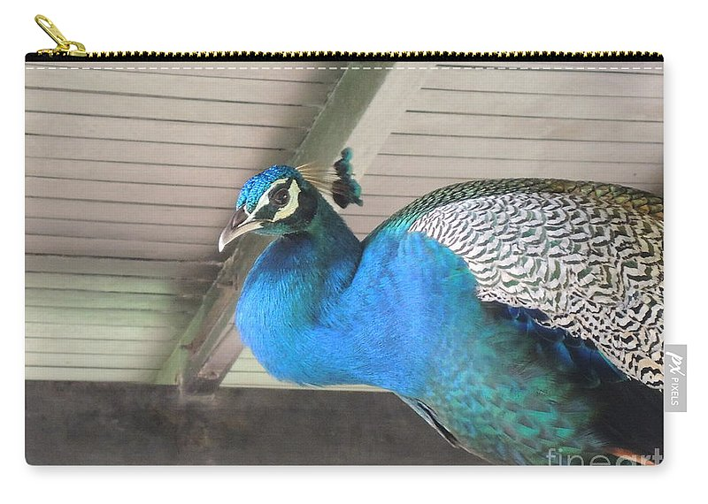 Bird Carry-all Pouch featuring the photograph Peacock In The Rafters by Mini Arora