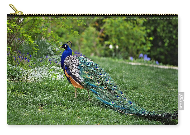 Animal Carry-all Pouch featuring the photograph Peacock by Ivan Slosar