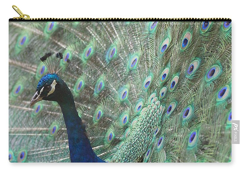 Peacocks Carry-all Pouch featuring the photograph Peacock by Jeffery L Bowers