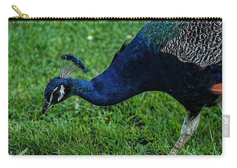 Peacock Carry-all Pouch featuring the photograph Peacock Portrait 4 by Photos By Cassandra