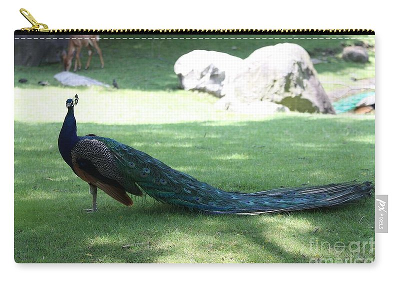 Peacock Strutting His Stuff Carry-all Pouch featuring the photograph Peacock Strutting His Stuff by John Telfer