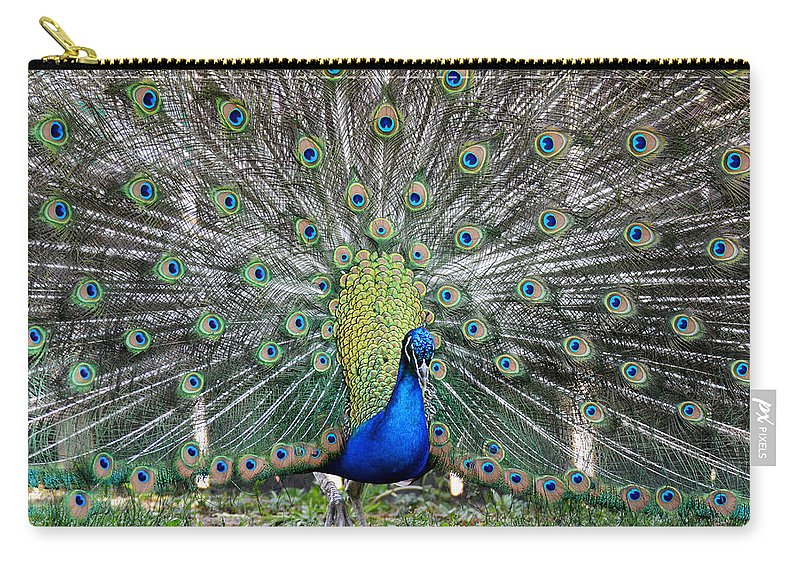 Peacock Carry-all Pouch featuring the photograph Peacock by Tracy Winter