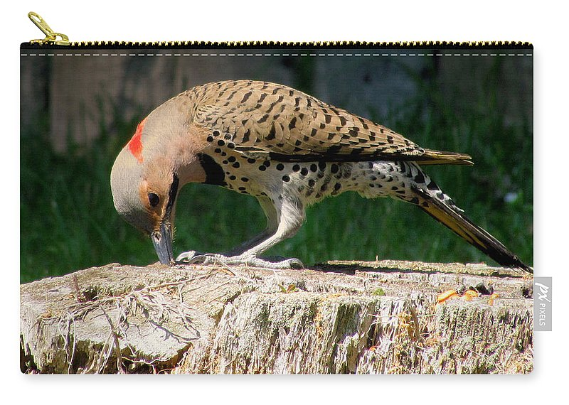 Birds Carry-all Pouch featuring the photograph Grab A Grub by Lori Pessin Lafargue