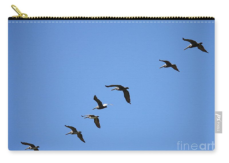 Pelicans Carry-all Pouch featuring the photograph Pelicans All In A Row by Carol Groenen