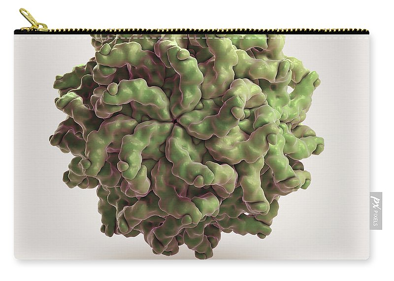 3d Visualisation Carry-all Pouch featuring the photograph Penicillium Stoloniferum Virus by Science Picture Co