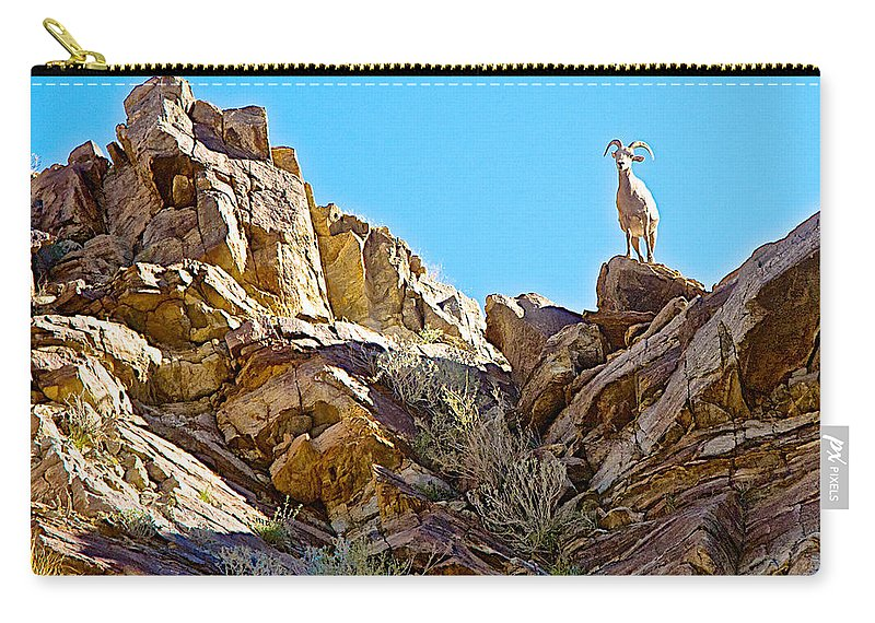 Peninsular Bighorn Sheep From Borrego Palm Canyon Trail In Anza-borrego Desert Sp Carry-all Pouch featuring the photograph Peninsular Bighorn Sheep From Borrego Palm Canyon Trail In Anza-borrego Desert Sp-ca by Ruth Hager