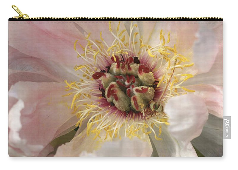 Flower Carry-all Pouch featuring the photograph Peonie In Soft Pink by Deborah Benoit