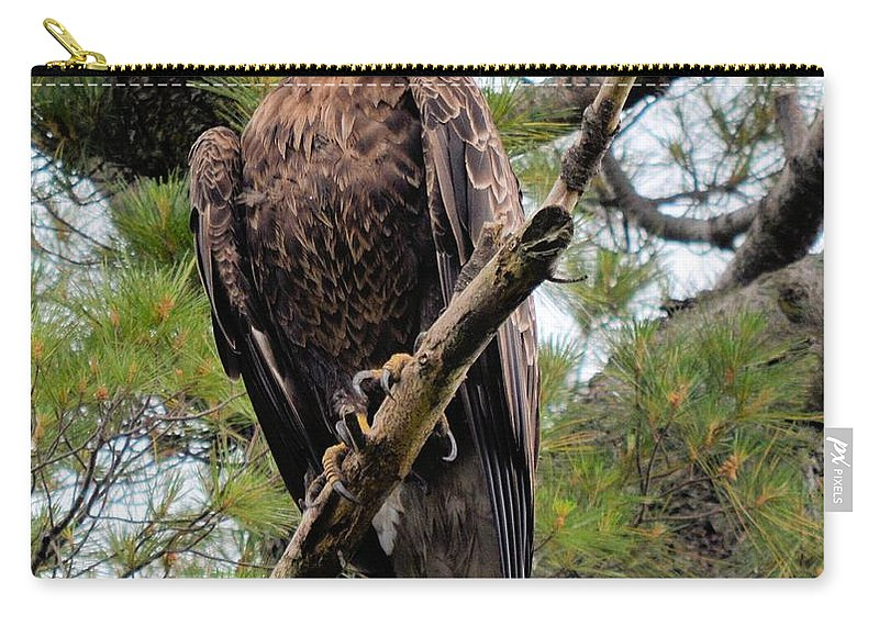 Eagle Carry-all Pouch featuring the photograph Perched After The Hunt by Bonfire Photography