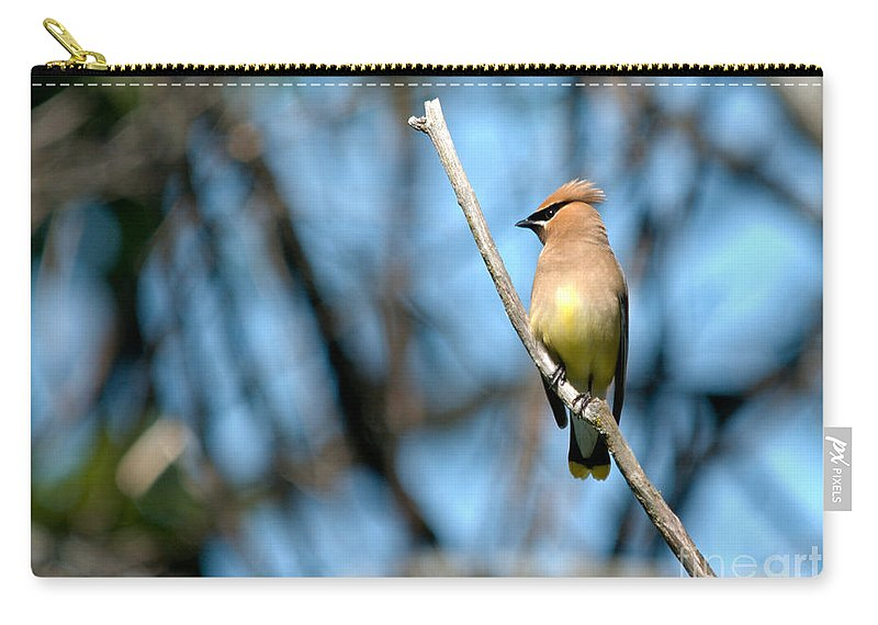 Cedar Waxwing Carry-all Pouch featuring the photograph Perched Cedar by Cheryl Baxter