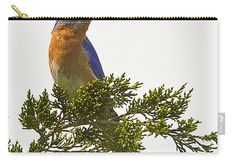 Bluebird Carry-all Pouch featuring the photograph Perched Eastern Bluebird by John Vose