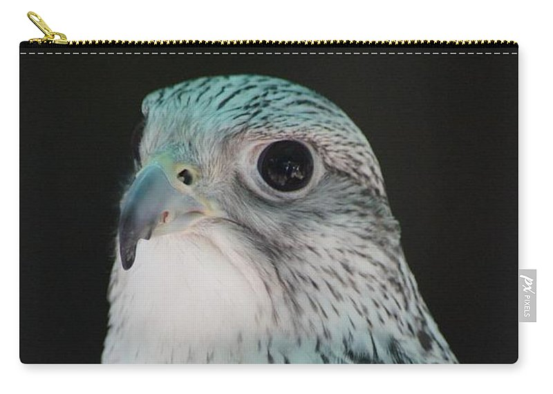 Birds Of Prey Carry-all Pouch featuring the photograph Peregrine Falcon by Lorelle Gromus