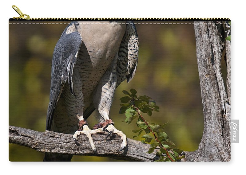 Peregrine Carry-all Pouch featuring the photograph Peregrine Falcon by Paul Cannon