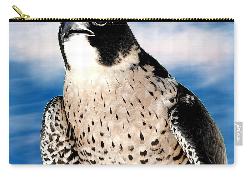 Peregrine Falcon Carry-all Pouch featuring the photograph Peregrine Falcon by Rose Santuci-Sofranko