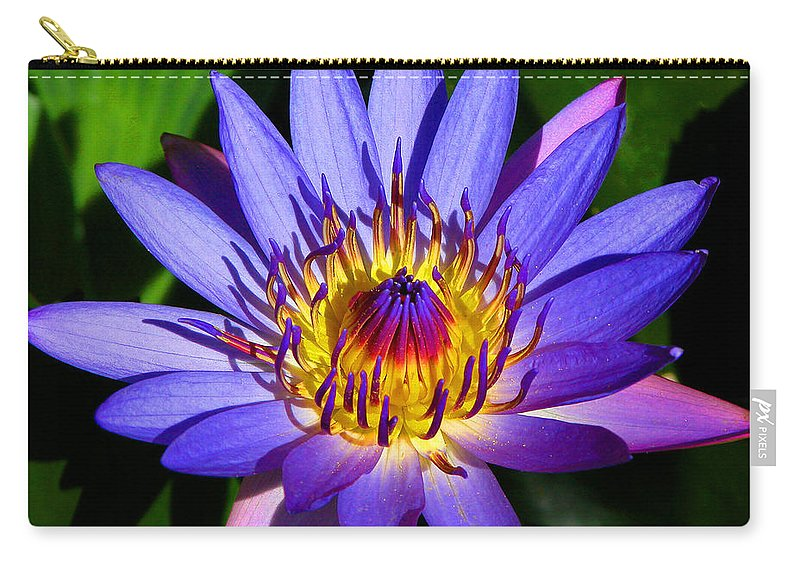 Lilly Carry-all Pouch featuring the photograph Perfect Water Lily by Lynn Bauer