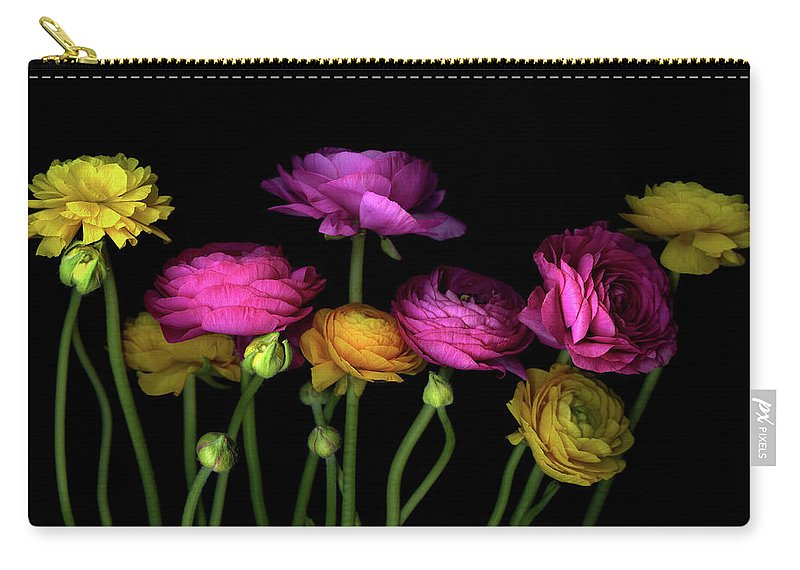 Black Background Carry-all Pouch featuring the photograph Persian Buttercups Ranunculus Asiaticus by Photograph By Magda Indigo