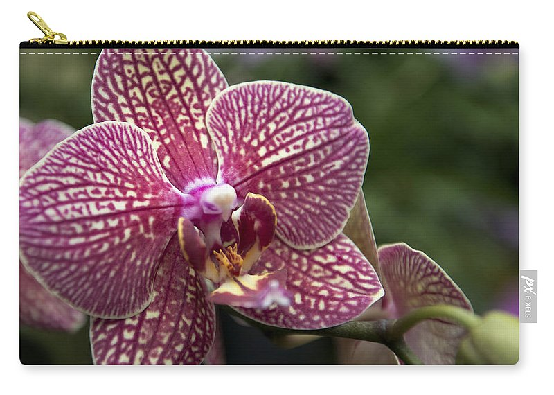 Macro Red Orchid Carry-all Pouch featuring the photograph Phalaenopsis Helen Alice Mary 2308 by Terri Winkler