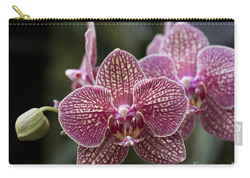 Red Phalaenopsis Orchid Carry-all Pouch featuring the photograph Phalaenopsis Helen Alice Mary 2346 by Terri Winkler