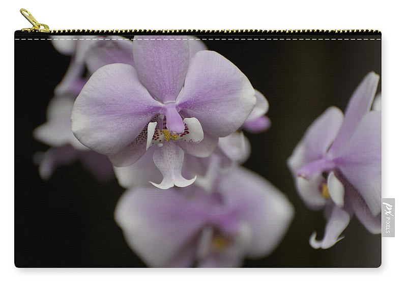 Purple Moth Orchid Carry-all Pouch featuring the photograph Phalaenopsis Schilleriana 8703 by Terri Winkler