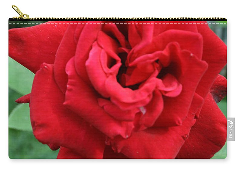 Rose Carry-all Pouch featuring the painting Photograph Reddest Of Roses by Matthew Brzostoski