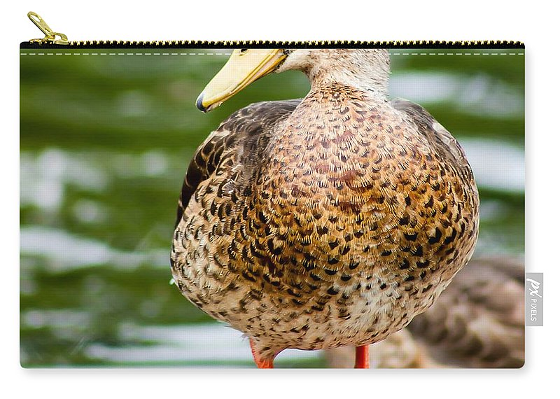 Mallord Carry-all Pouch featuring the photograph Picture Perfect - Mallard Duck by Nikki Vig