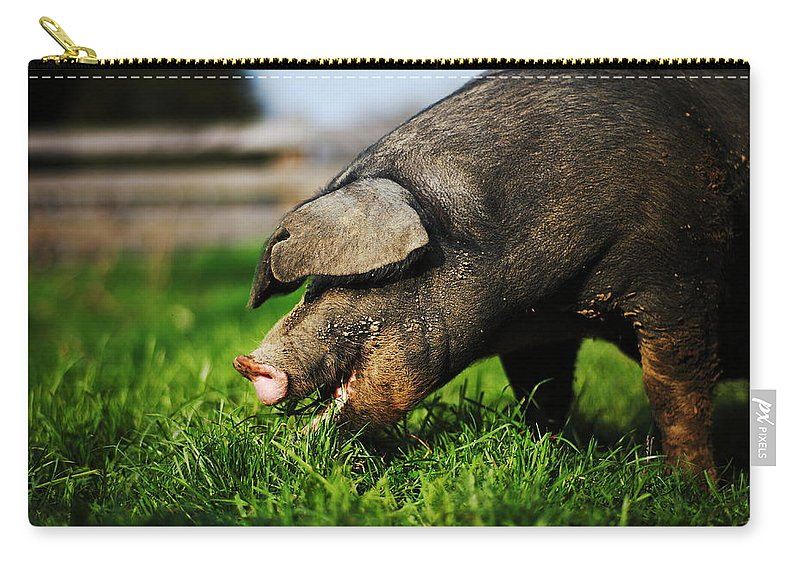 Pig Carry-all Pouch featuring the photograph Pig Eating by Jimss