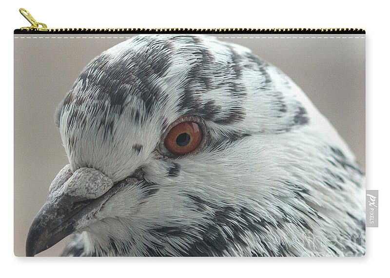 Birds Carry-all Pouch featuring the photograph Pigeon Close-up by Jivko Nakev