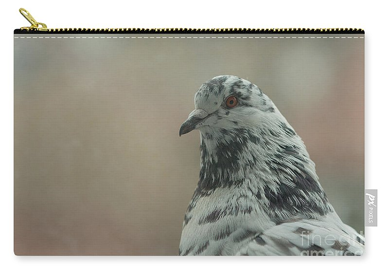 Birds Carry-all Pouch featuring the photograph Pigeon Portrait by Jivko Nakev