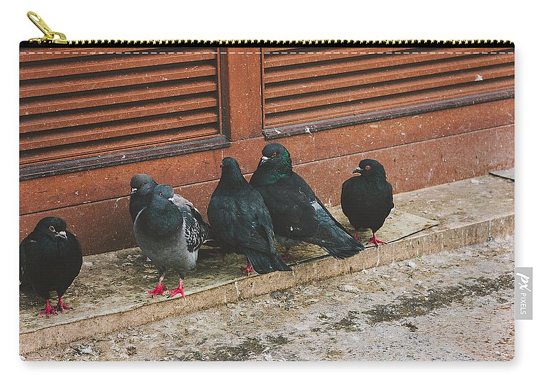 Animal Carry-all Pouch featuring the photograph Pigeons by Pati Photography