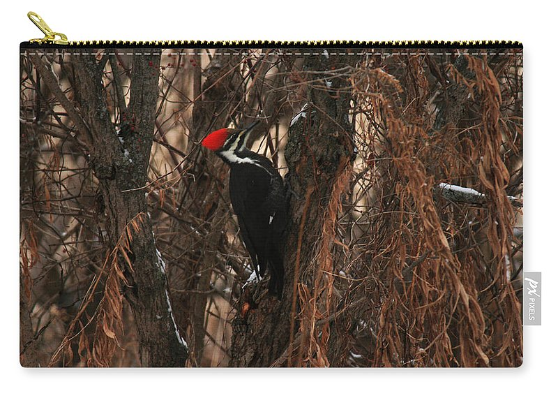 Pileated Woodpecker Carry-all Pouch featuring the photograph Pileated In Winter by Crystal Heitzman Renskers