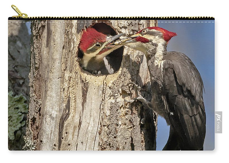 Pileated Woodpecker Carry-all Pouch featuring the photograph Pileated Woodpecker And Chick by Susan Candelario