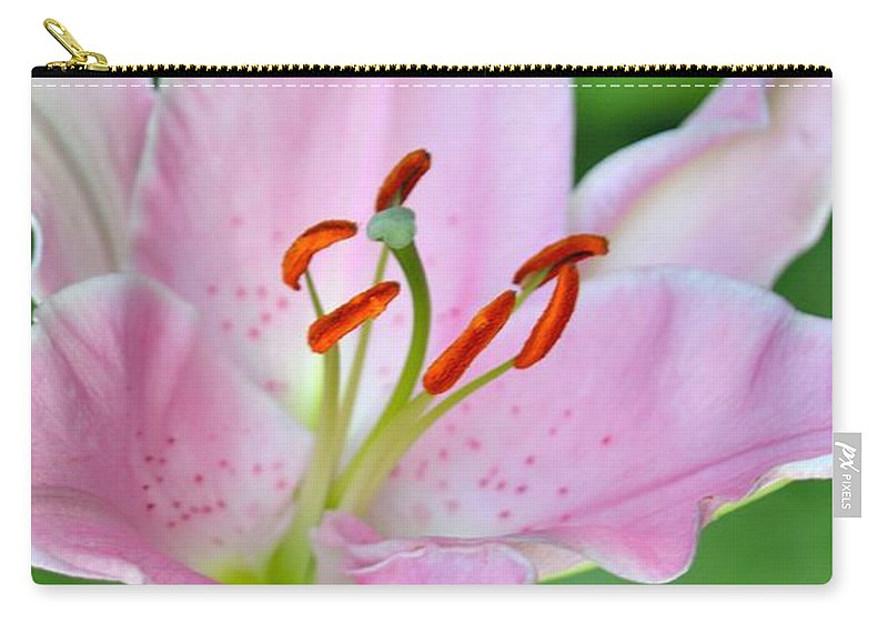 Lily Carry-all Pouch featuring the photograph Pink Lily by Jatinkumar Thakkar