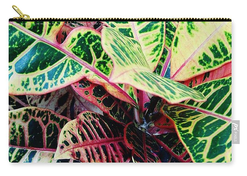 Croton Carry-all Pouch featuring the photograph Pink And Yellow Croton by D Hackett