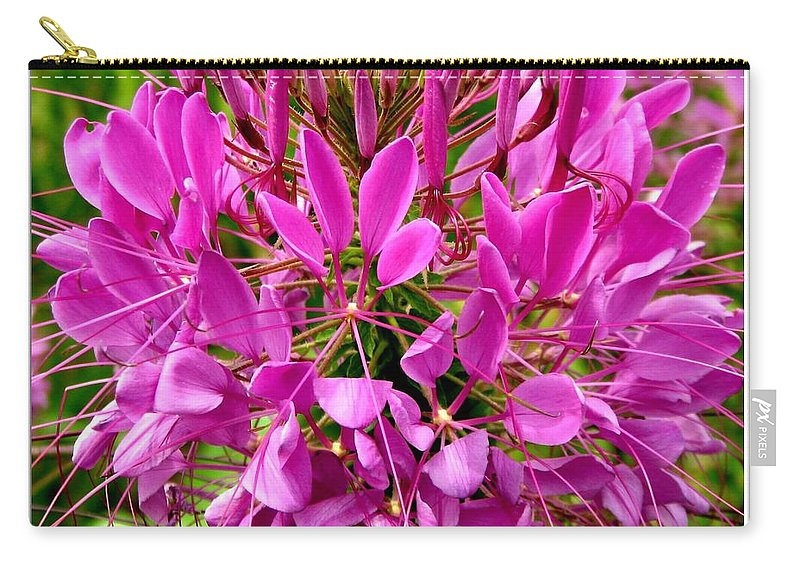 Cleomes Carry-all Pouch featuring the photograph Pink Cleome Flower by Rose Santuci-Sofranko