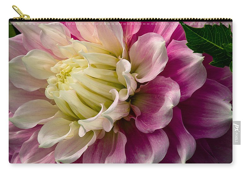 Dahlia Carry-all Pouch featuring the photograph Pink Dahlia by Jean Noren