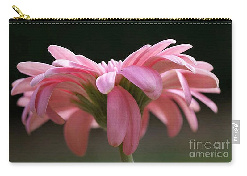 Pink Carry-all Pouch featuring the photograph Pink Daisy 1 by Carol Lynch