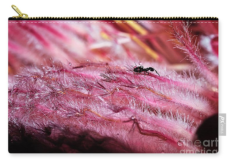Photography Carry-all Pouch featuring the photograph Pink Ice Protea Macro With Ant by Kaye Menner