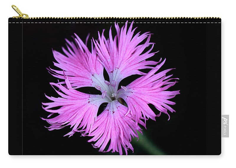 Monarda Carry-all Pouch featuring the photograph Pink Lace by Rebecca Morgan